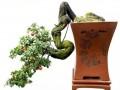 现在有很多专业的养花人都在盆景艺术在线现身