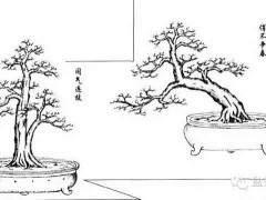 劉仲明老師的嶺南盆景造型圖