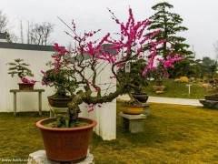盆景造型與養護  澆水與病蟲害防治