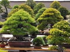 下一站:世界上最着名的松树亚博app苹果下载花园