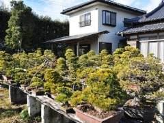 访问日本盆友桥本诚的盆景园