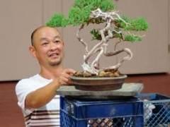 日本国府获奖盆景艺术家Akio Kondo评论