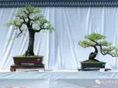 嶺南盆景的3個特點和4個風格