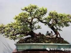 嶺南盆景探源與欣賞