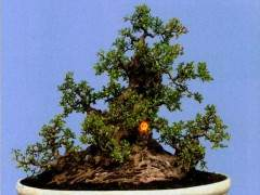 榕树最能表达岭南亚博app苹果下载中截干蓄枝独特的手法