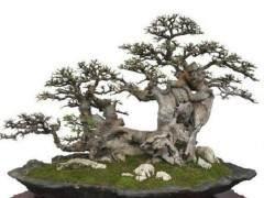 《花木盆景》改版后 我又毫不犹豫地订了盆景赏石版