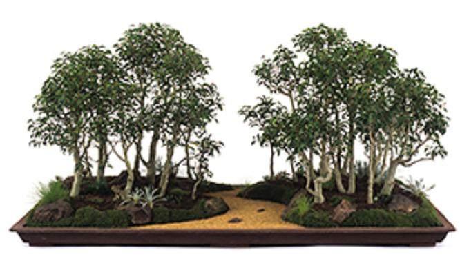 如何更好的修剪叶榕盆景?