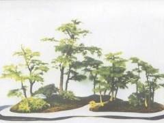 张夷的砚式盆景正是不断地追求着这样的文人理想