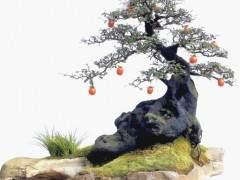 四川金弹子盆景艺术之乡通过专家评审