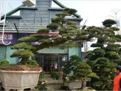 杭州萧山盆景花木市场的植物价格将大起大落
