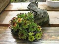 盆景主景植物也是展示盆景艺术的一部分