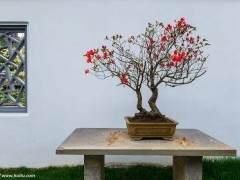 中国花卉协会盆景植物分会多肉植物产业小组正式成立