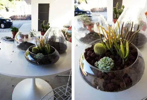 玻璃盆景DIY教程 第5步