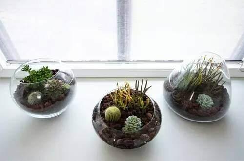 玻璃盆景DIY教程 第4步