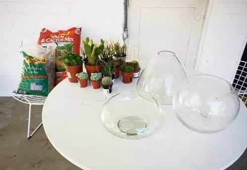 玻璃盆景DIY教程 第1步