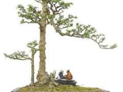養護山指甲盆景 最重要的一環是澆水