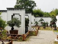 鲍家花园中国最大的私家园林和盆景观赏地