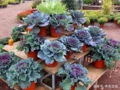 最耐寒的盆景植物有哪些?