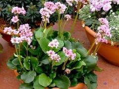 10种在室外最耐寒的盆景植物