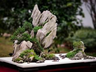 重庆第六届盆景展