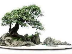 山水盆景发家致富(图)
