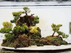 贵州省盆景艺术博览会在省植物园开幕