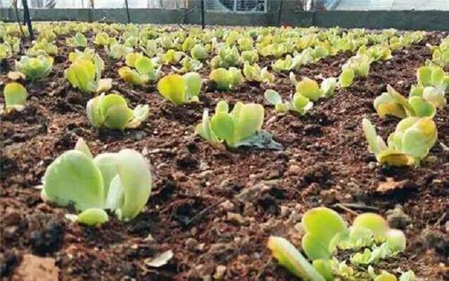 韩国智勇投资8000万元 用于多肉植物的新品种研发