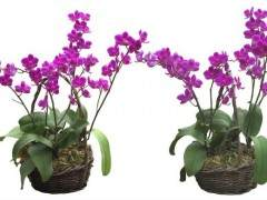 客厅里花卉盆景的摆放高度也有讲究: