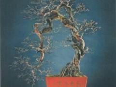 盛光荣先生的雀梅盆景《唐梅宋骨》