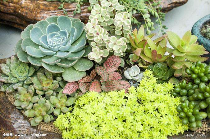 多肉植物具有以下3个方面的特点