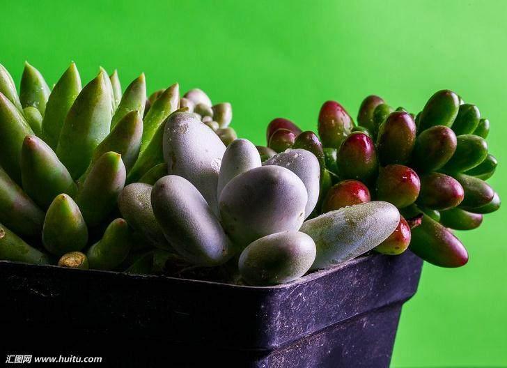 多肉植物的冬季管理应围绕着防寒保温进行