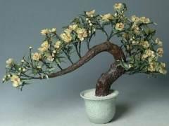 花卉盆景常用的修剪方法有哪些?