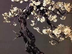 种植梅花盆景的土壤温度与湿度