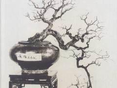 岭南盆景的发展经历了那几个阶段?