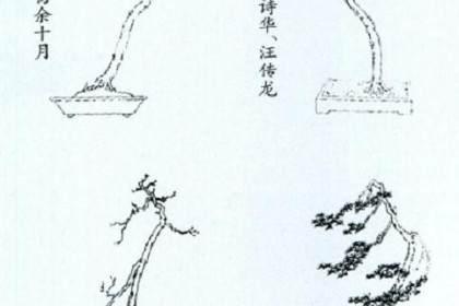 文人树与一般盆景形态比较 有下列4个特点