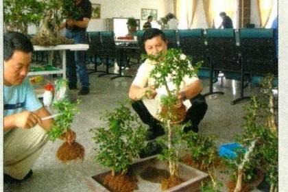 刘传刚演示树石丛林盆景的制作过程