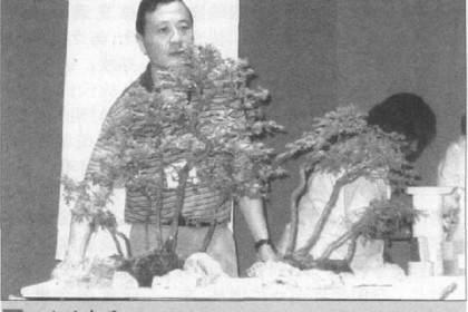 如何制作水旱盆景上的苔藓?