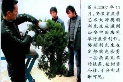 图解本人对台湾真柏盆景的改作过程