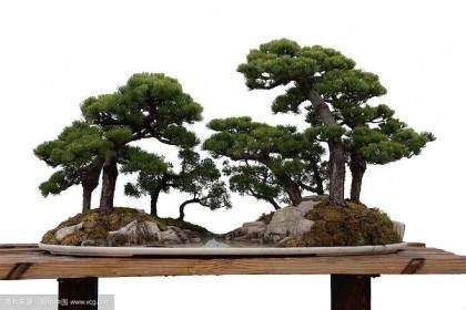 看了最近刊于《花木盆景》的扬州宣言