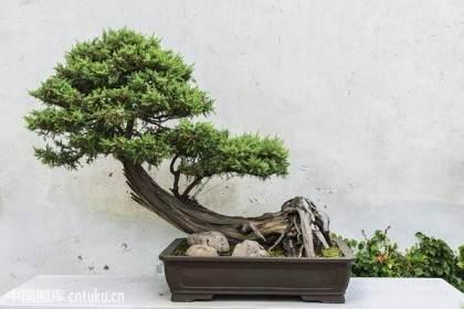 苏州拙政园首次举办盆景花卉工汉式拜师礼