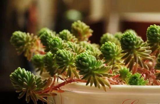 多肉植物的徒长与配土浇水有关