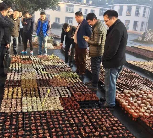首届云南省多肉产业论坛在昆明举办