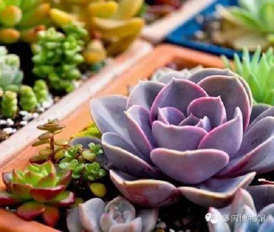 中国首批多肉植物新品种在云南诞生