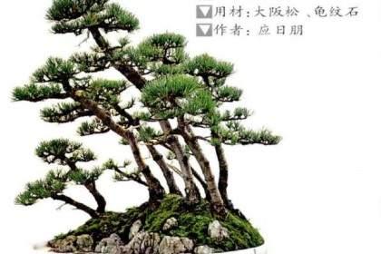 丛林盆景的主干与主枝初步造型的4个方法