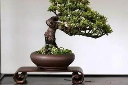 浙江盆景艺术有着鲜明的地方特色和时代精神
