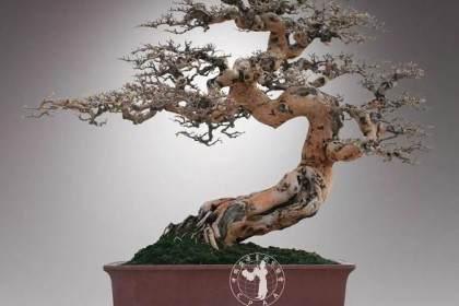 嶺南盆景體現了中國文化的審美意識