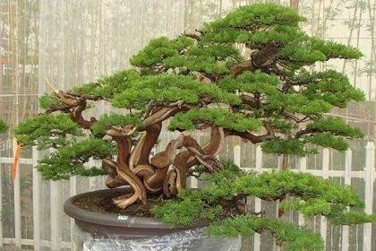 自然美與藝術美的結合 養盆景澆水經驗點滴