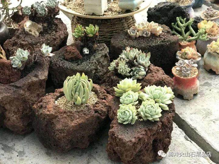 为什么小型盆栽都喜欢用火山石花盆呢?