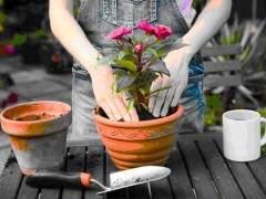 盆栽植物什么时候换盆?如何换盆?