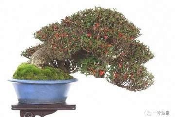 微型盆景的上盆不能使用普通的土壤